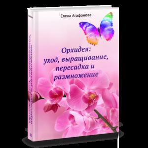 3Д обложка Книга Орхидеи